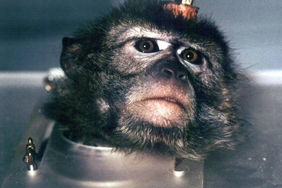 Anstatt das die Versuche enden, wurden nun 9 Tiere für neue Versuche ins Ausland geschickt (Symbolbild)