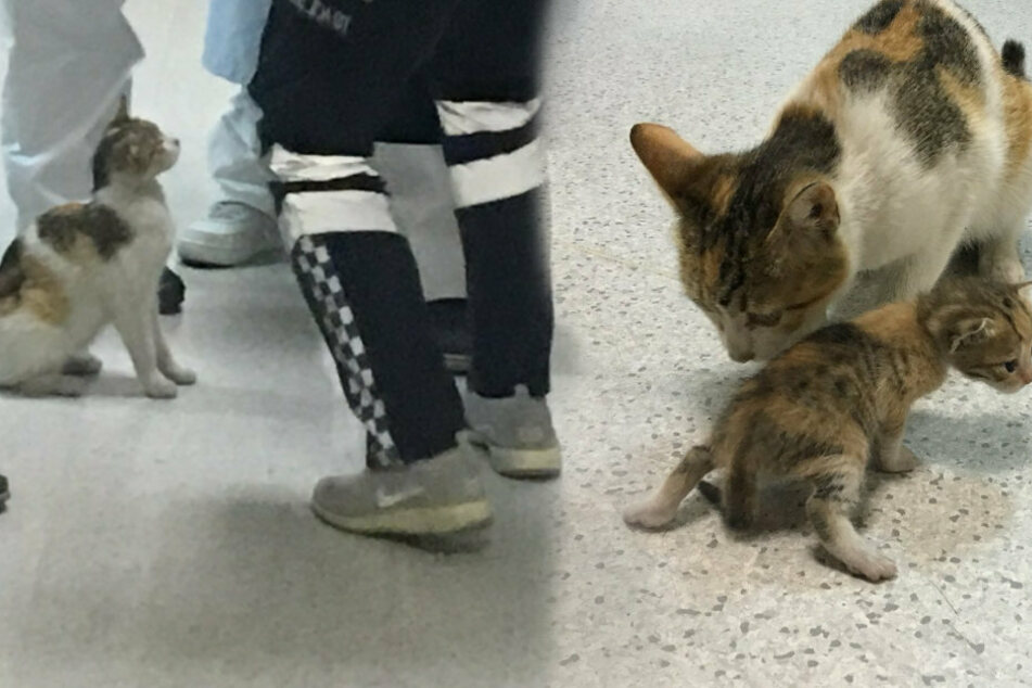 Die Katzenmama mit ihrem Kleinen. Die Ärzte kamen sofort herbeigerannt und halfen ihr.