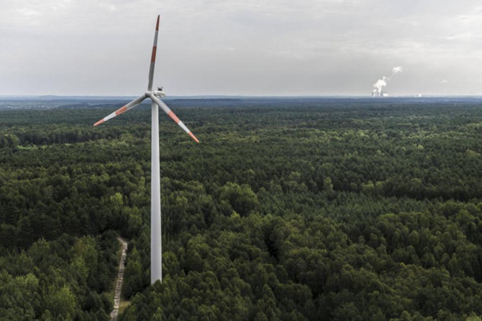 Der Freistaat hat sich offiziell das Ziel gesetzt, seinen Wald zu mehren. Ungeachtet dessen wird jetzt darüber nachgedacht, Windräder in Nutzwäldern zu errichten.