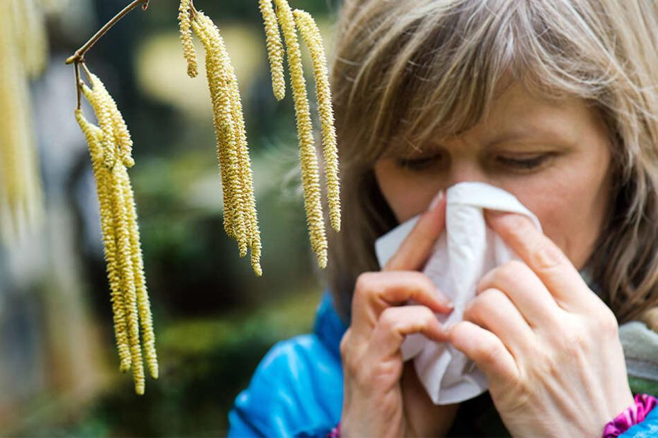 Frühe Plage für Allergiker: Diese Pollen sorgen schon jetzt für dicke Nasen