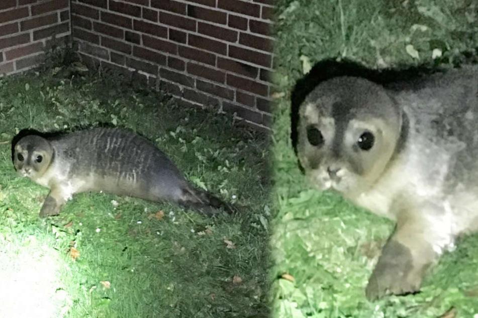 Mann entdeckt unglaublichen Besuch im Vorgarten