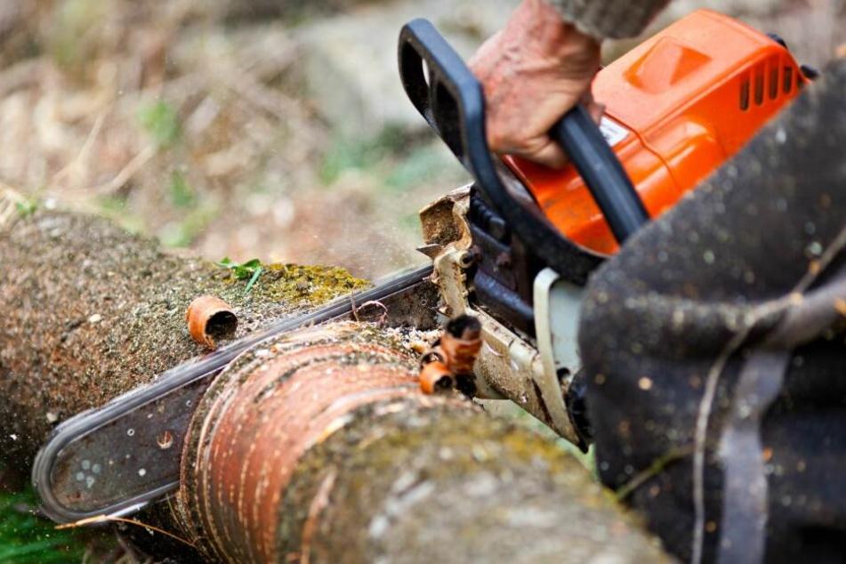 Bislang unbekannte Täter haben auf rund 40 Metern illegal Bäume gekappt. (Symbolbild)