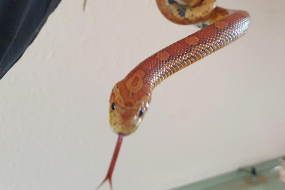 Albtraum-Fund: Entkommene Schlange kriecht über Terrasse