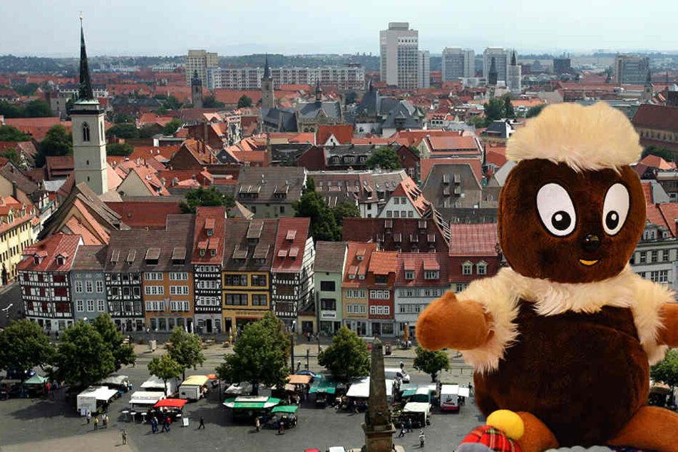 Pitti soll zukünftig in der Erfurter Altstadt zu sehen sein.