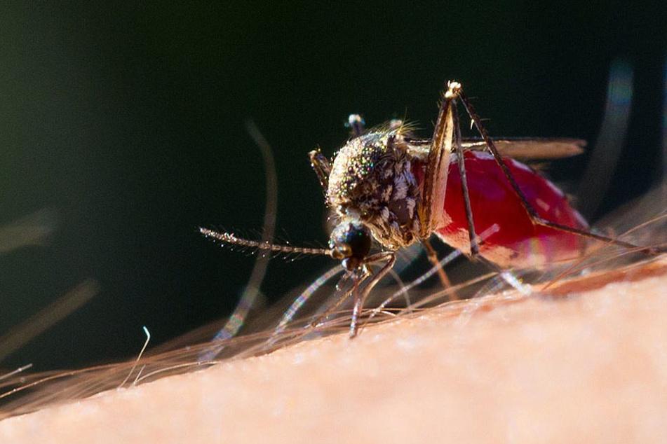Heftige Mückenplage: Wie kann ich mich richtig schützen?