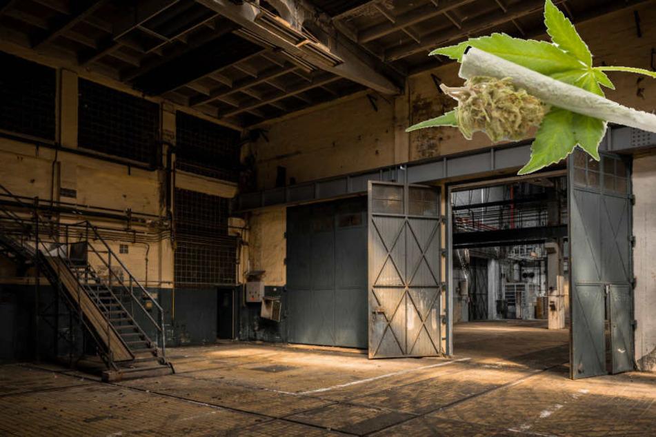 1500 Marihuanapflanzen: Polizei stößt auf Indoorplantage