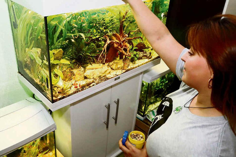 Auf Wunsch kümmert sich die Jungunternehmerin auch um die Wartung von Aquarien.