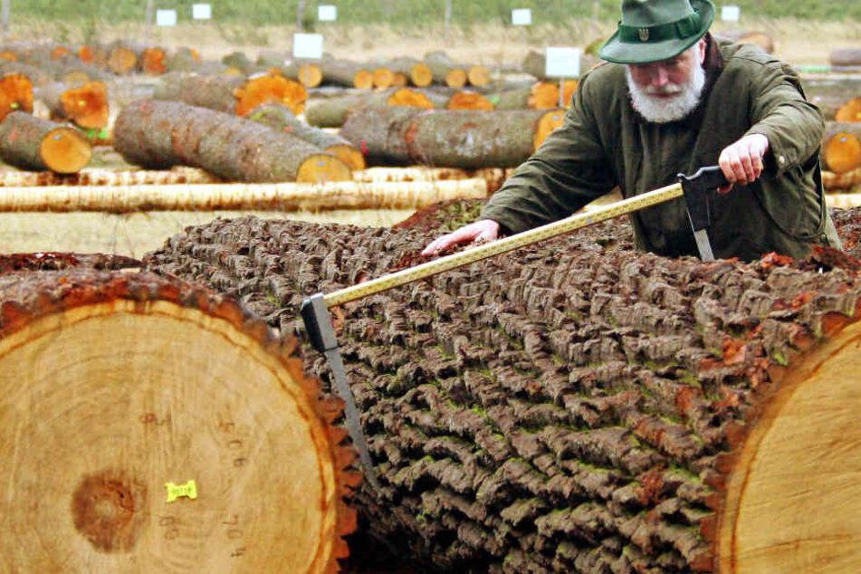 Bis zu 2000 Festmeter Edelholz werden auch bei der nächsten Versteigerung wieder unter den Hammer kommen.