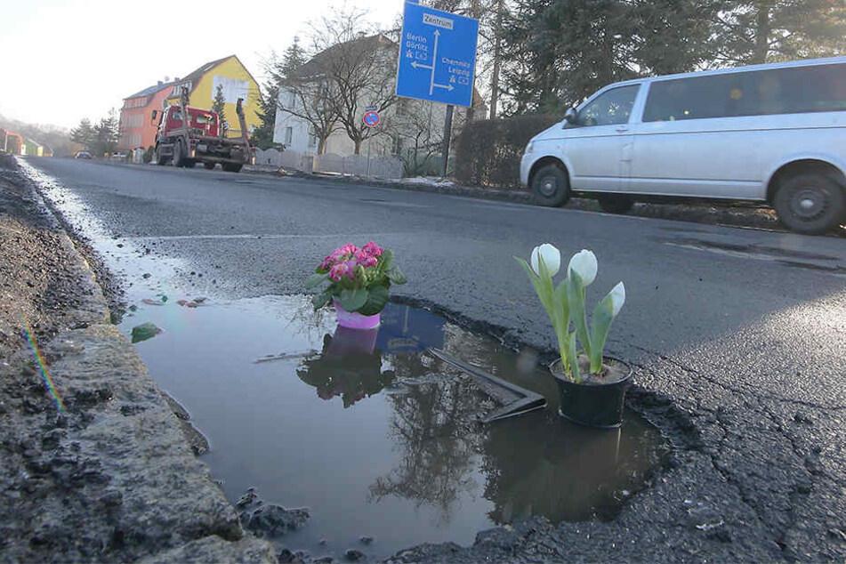 Unbekannte bepflanzten die Schlaglöcher der Radeburger Straße mit Blumen.