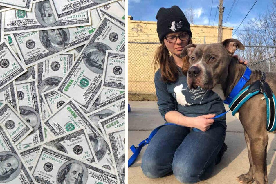 Während es Vinny schon wieder sichtlich besser geht, hat PETA eine Belohnung auf den Täter ausgesetzt.