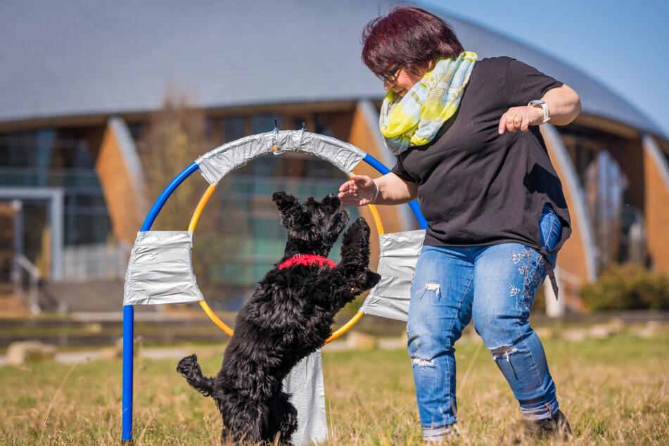 Springender Hund von Hannover stellt Weltrekord auf