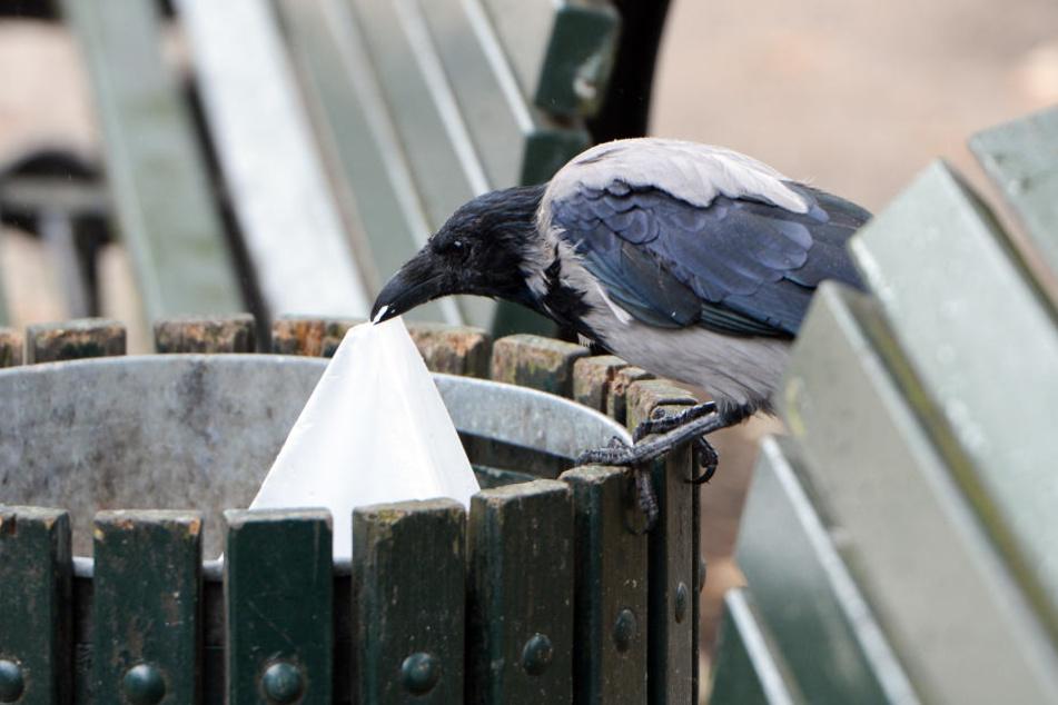 Unter den Linden sucht eine Krähe in einem Papierkorb nach Fressbarem. (Symbolbild)