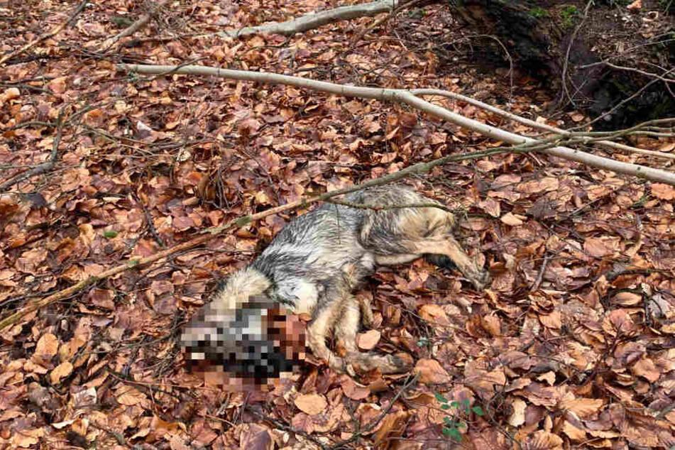 Ein toter Hund wurde entlang einer Straße aufgefunden.