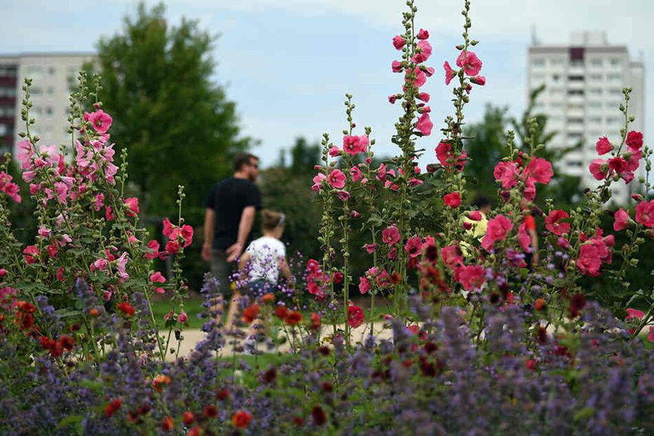 Die internationale Gartenausstellung befindet sich zwischen den Hochhäusern in Berlin-Marzahn.