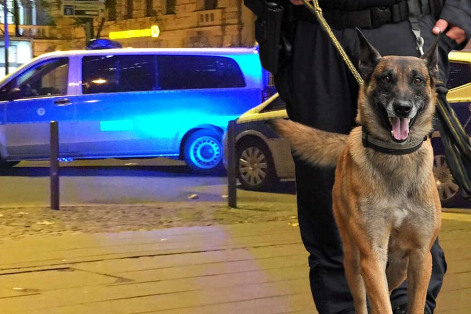 Die Einsatzkräfte wurden von einem Polizeihund begleitet (Symbolbild).