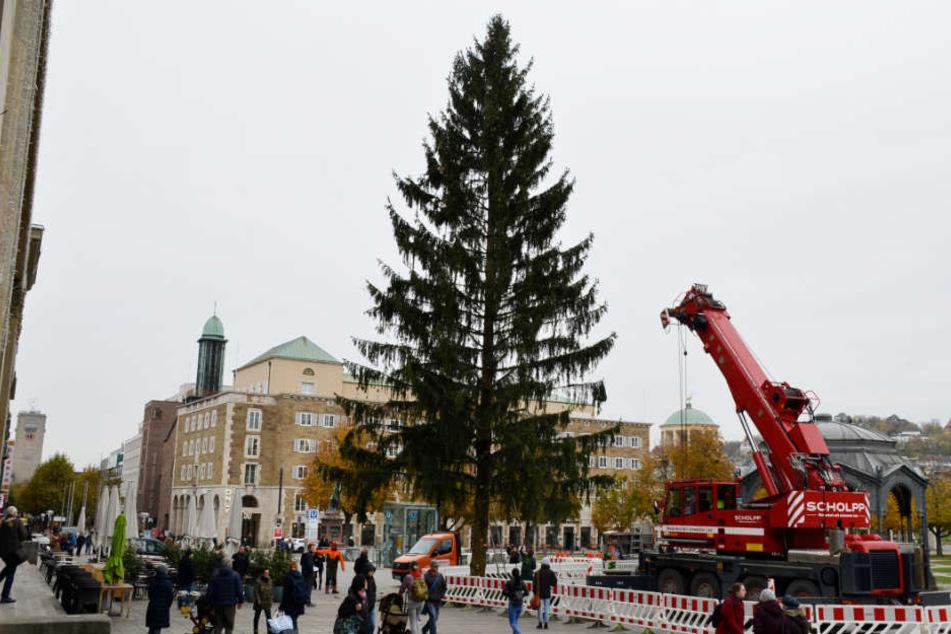 Die Rotfichte soll bis zum Start des Weihnachtsmarktes (29. November) festlich geschmückt werden.