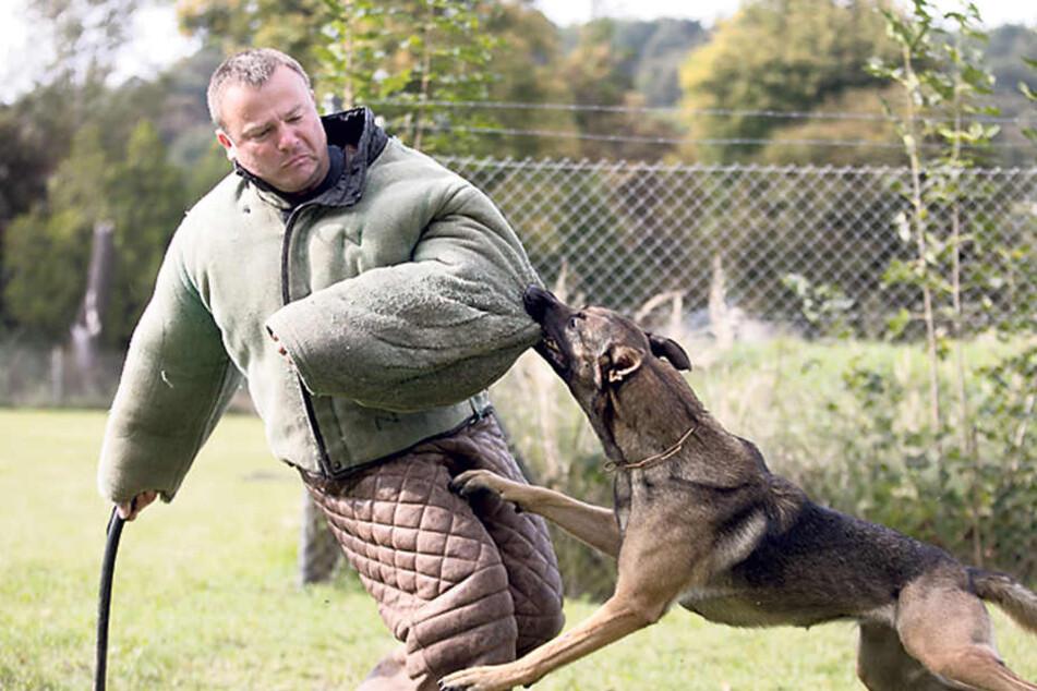Schäferhündin Rieke (2) zeigt an ihrem Herrchen Steffen Schöne (44), wie man Täter stellt.