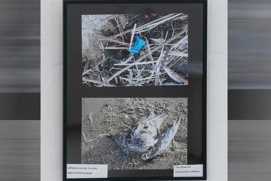 In seiner Ausstellung über das Wattenmeer zeigt Bernert, was dort als Todesfallen angeschwemmt wird.