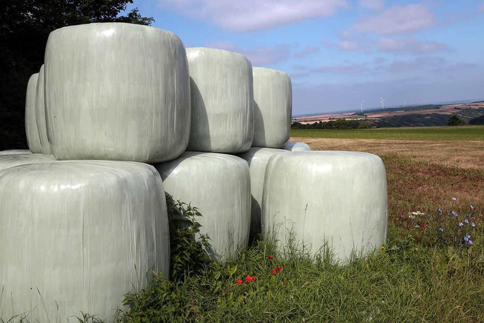 Dreist! 16 solcher Silageballen wurden bei Ottendorf-Okrilla gestohlen.