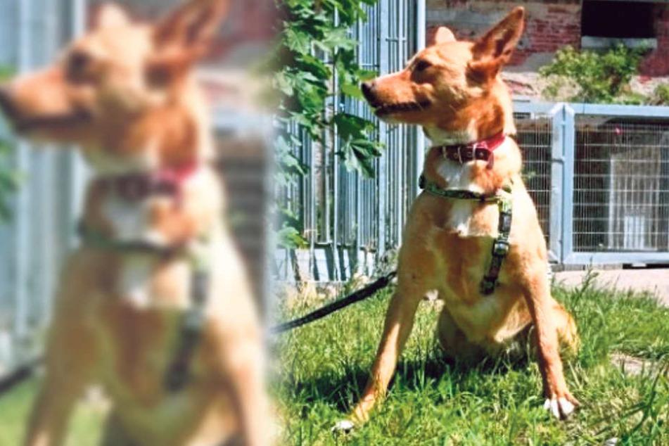 Frau will entlaufenen Hund zurück, aber es gibt ein Problem