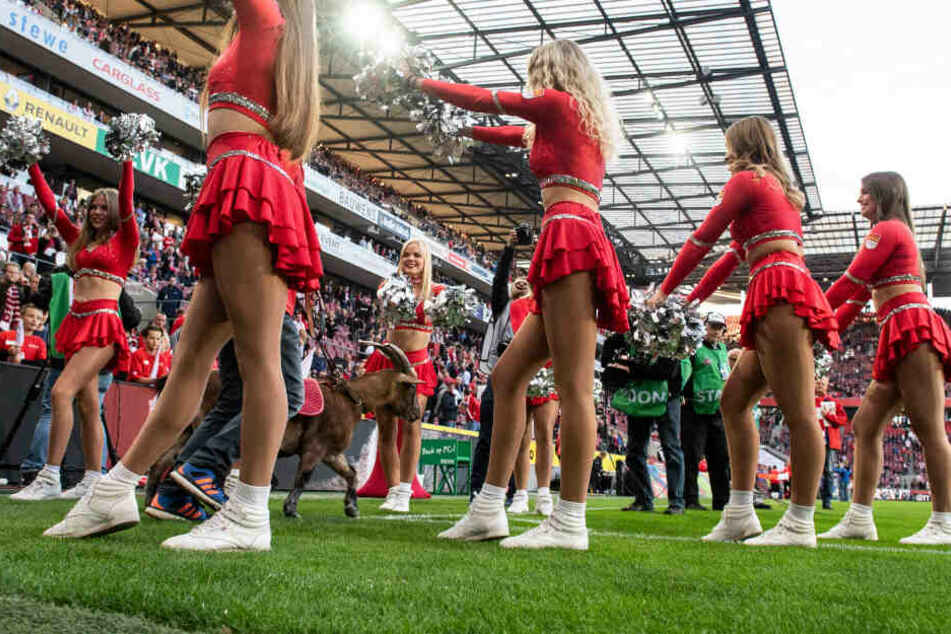 """Cheerleader begrüßen Kölns Maskottchen Geißbock """"Hennes""""."""