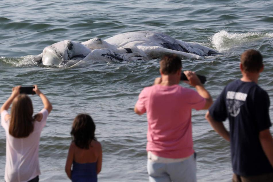 Touristen staunten über den Meeresriesen am Ufer, schossen fleißig Fotos.