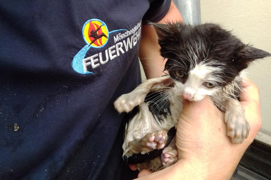 Ein Feuerwehrmann hält die kleine Katze in der Hand.