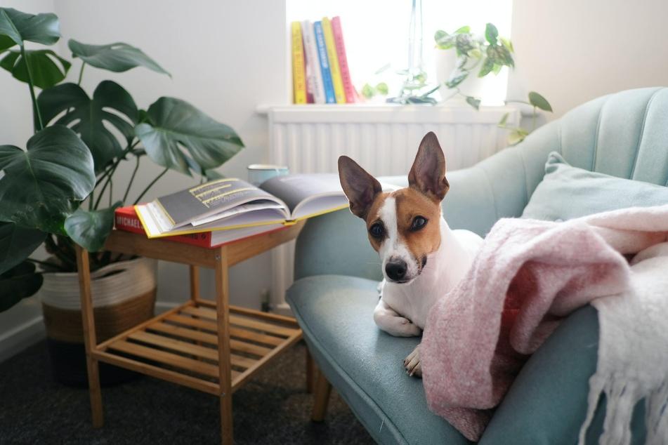 Ein sauberes Zuhause verringert für Hunde das Risiko, sich im Haushalt mit Parasiten zu infizieren und Allergien zu entwickeln.
