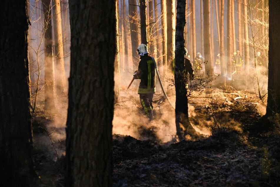 Schwerer Waldbrand in Brandenburg: 25.000 Quadratmeter in Flammen