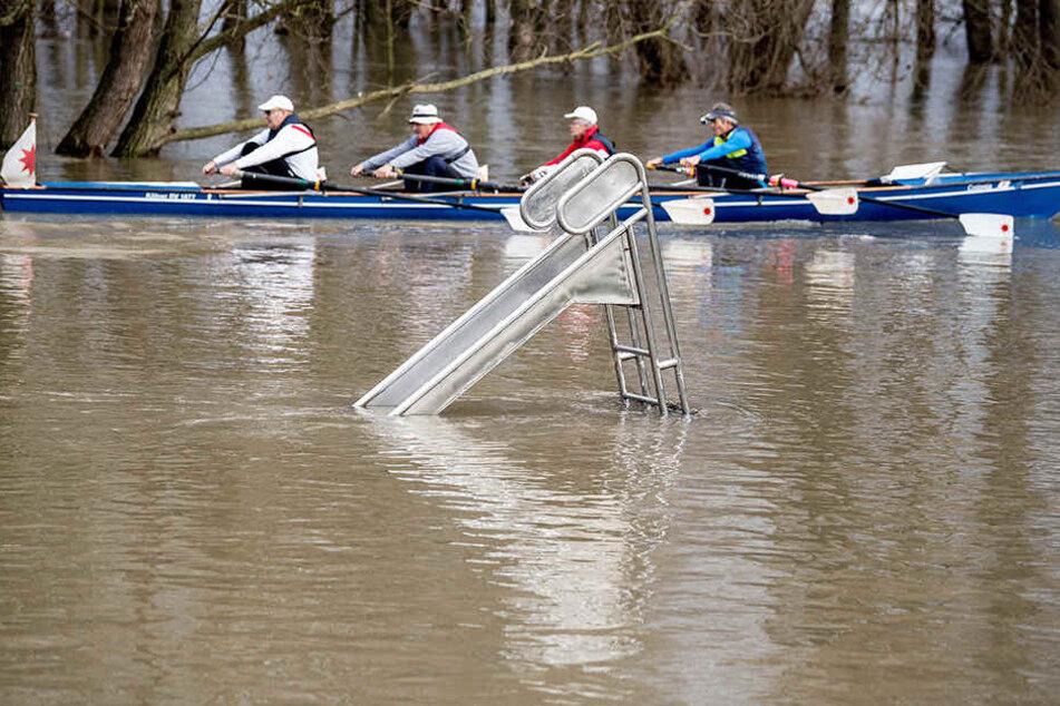 Das Rhein-Hochwasser sorgt für ungewöhnliche Ausflüge.