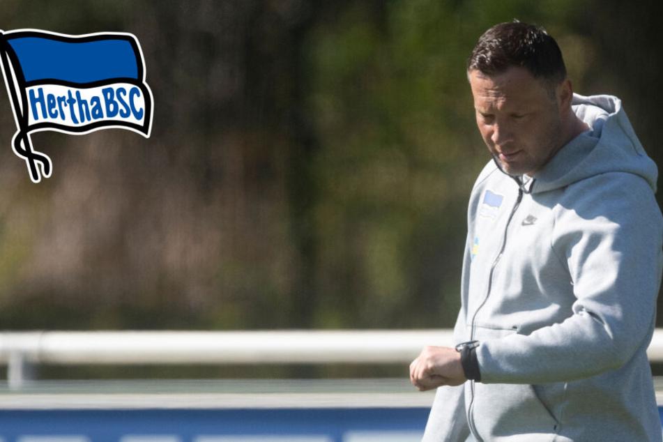 Pal Dardai wird ab Sommer 2019 nicht mehr Trainer der Profimannschaft von Hertha sein.