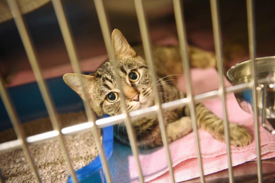 Traurig sitzt die Katze in einem Käfig. (Symbolbild)