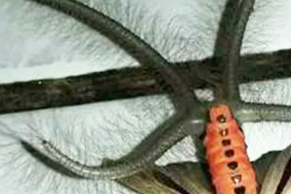 Was bitte ist das?! Foto von Grusel-Tierchen bringt das Internet zum Ausrasten