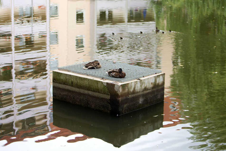 Bis auf den Abfluss ist am Ottoteich nichts gemacht worden. Vor allem am Wasserzufluss mangelt es dem Gewässer.