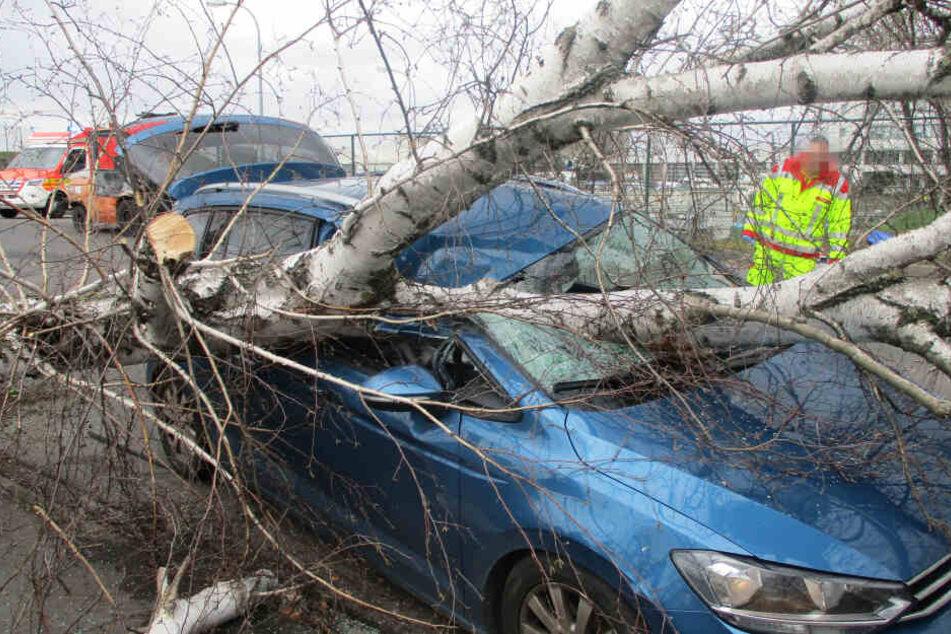Baum stürzt auf voll besetztes Auto mit Kindern!