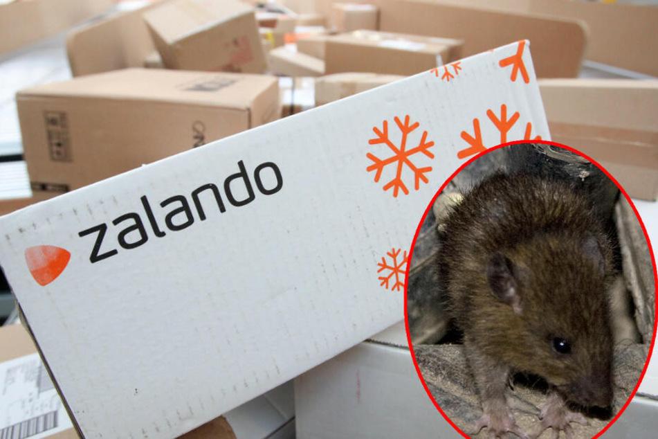 Am Postbahnhof haben die Mitarbeiter mit Ratten zu kämpfen. (Symbolbild)