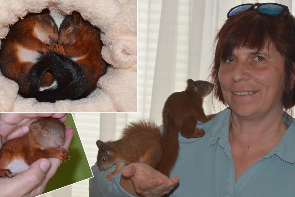 Schnelle Nager-Hilfe: Sie ist Dresdens Eichhörnchen-Mutti