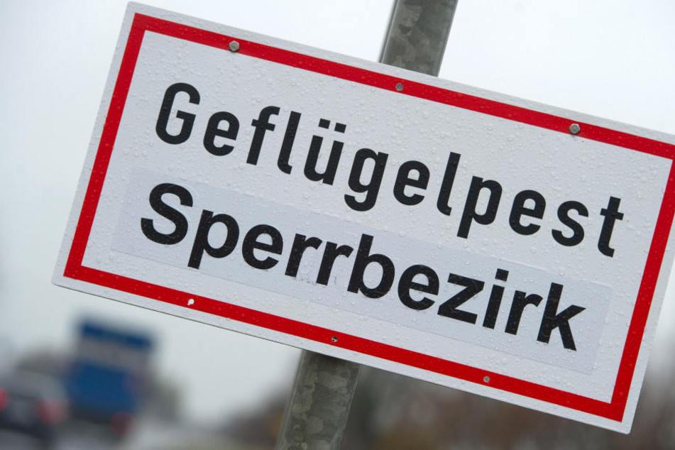 Gefahr noch immer hoch: Vogelgrippe weiterhin auf dem Vormarsch