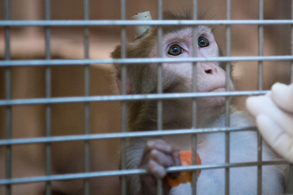 Affen bis aufs Blut misshandelt: Jetzt kommt es zum Prozess