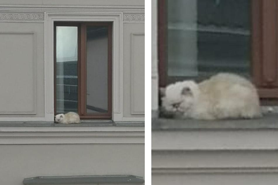 Eine Aufnahme vom Montagmorgen: Die Katze sitzt zusammengekauert auf dem Fenstersims einer fremden Wohnung im vierten Stock.