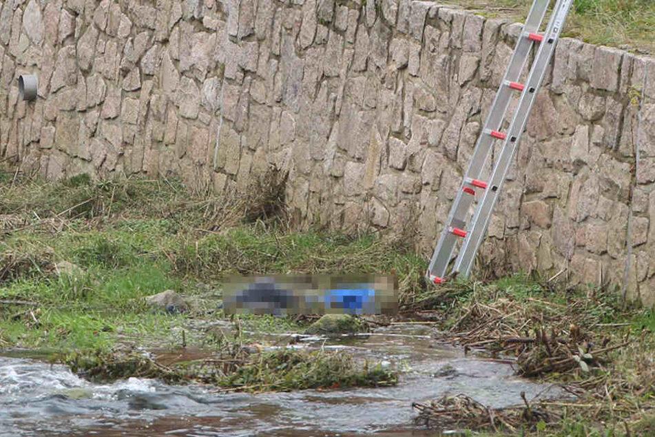 Grausiger Fund am Donnerstag in Schmiedeberg! Spaziergänger entdeckten eine Leiche.