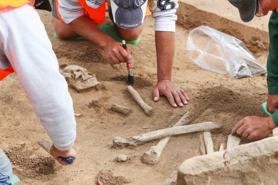 Mann pflügt Boden und bringt Knochen an den Tag, Forscher sind begeistert