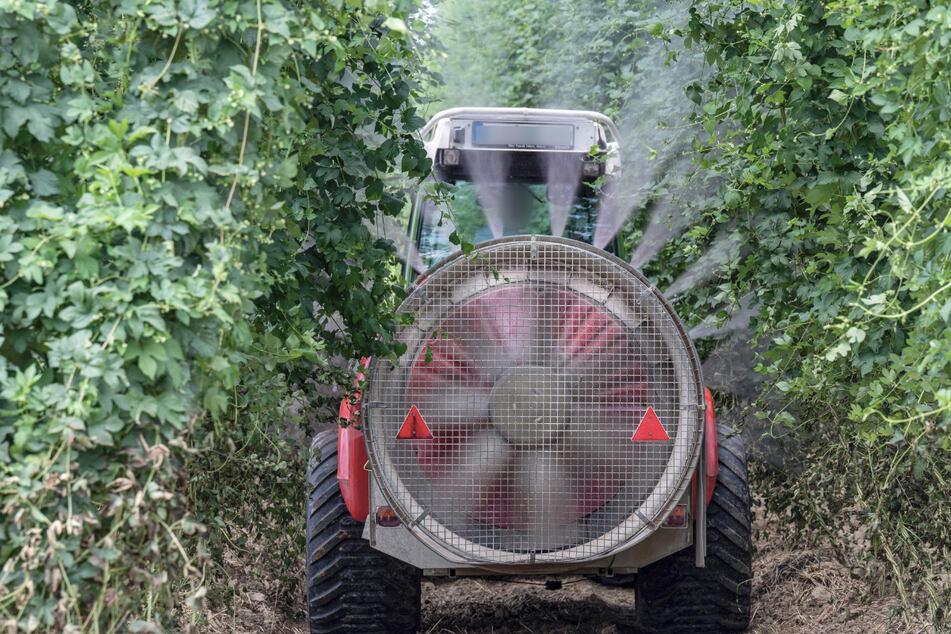 Oft setzen Landwirte Pestizide zum Pflanzenschutz ein. Könnte die Gentechnik mehr Einfluss bekommen? (Symbolbild)