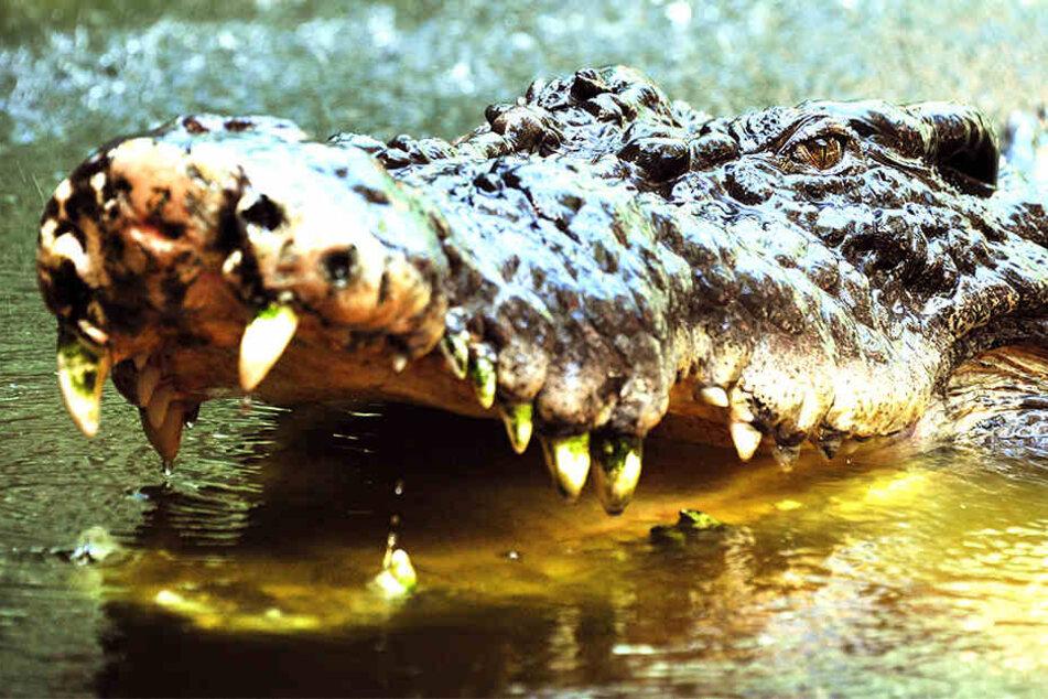Ein riesiges Reptil hat eine Frau in Indonesien aufgefressen.