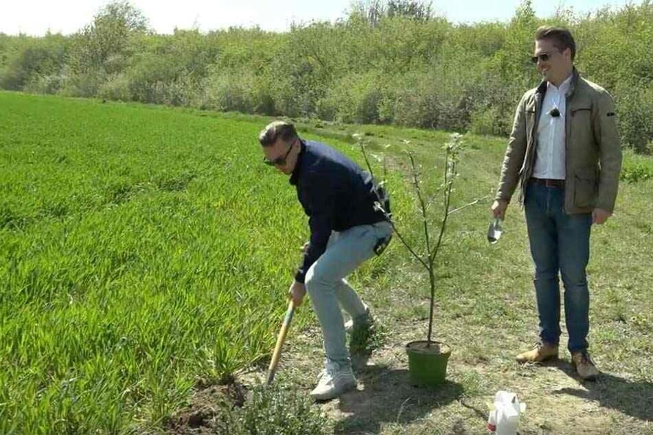 Paul gräbt, Tom kommentiert: Gar nicht so einfach, einen Baum fachgerecht in die Erde zu bringen.
