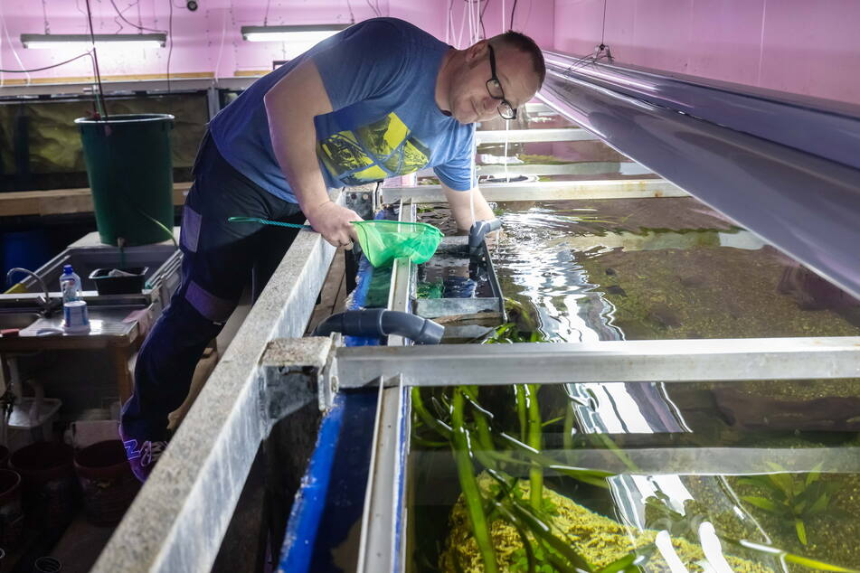 Tierpfleger Uwe Sebastian (44) reinigt das neue Amazonaslandschaft.