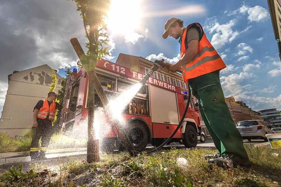 Zu wenig Personal und Fahrzeuge: Darum müssen unsere Bäume dursten