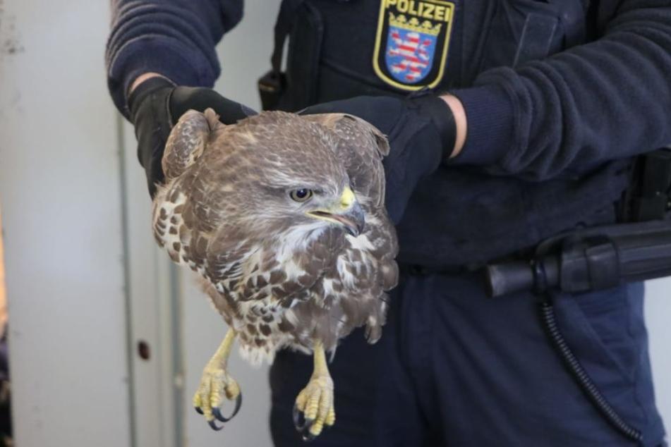 Ein aufmerksamer Autofahrer entdeckte das flugunfähige Tier auf der A3.