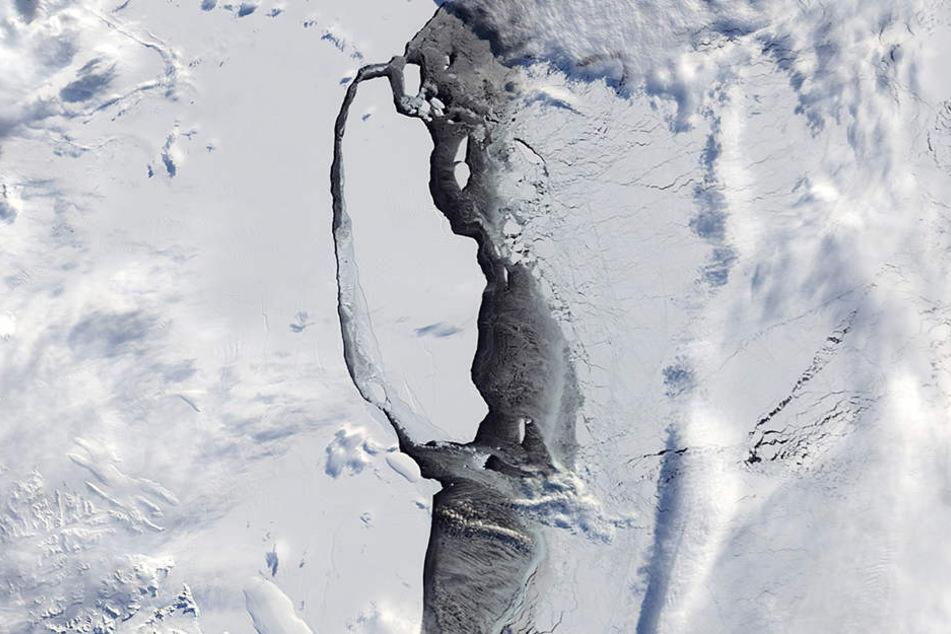 Der massive Eisberg hat sich in der Antarktis vom Larsen-C-Schelfeis gelöst und treibt nun auf das Meer hinaus.