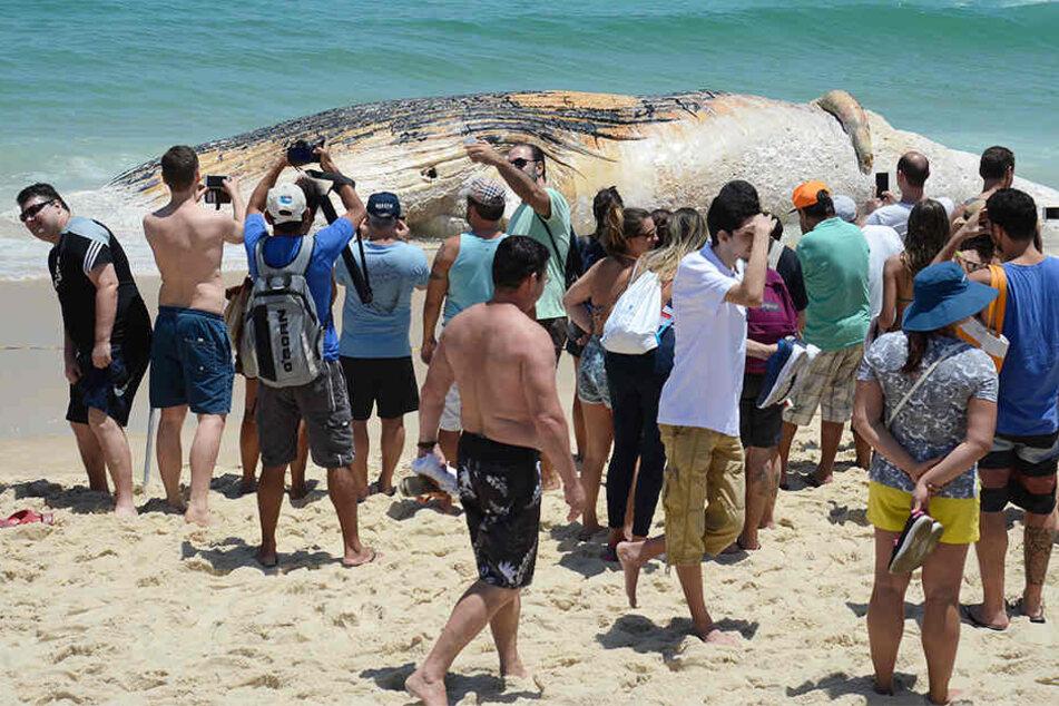 Schaulustige machen Fotos mit dem angespülten Tier am Strand von Rio de Janeiro.